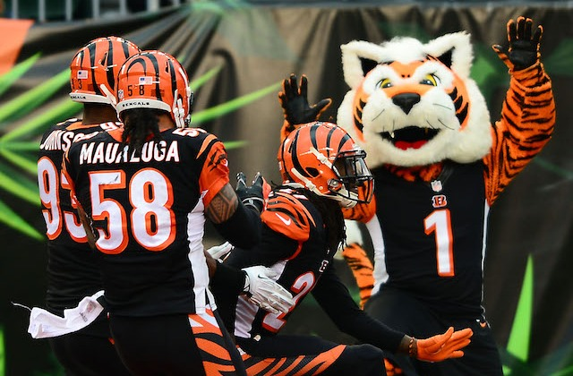 Who-dey the mascot is excited because the Bengals playoff game is sold out. (USATSI)