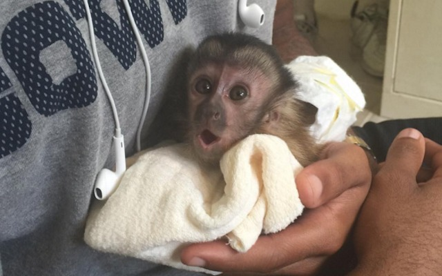 LOOK: Dez Bryant has the most adorable baby monkey ever