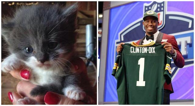 Ha Ha Clinton-Dix, meet Ha Ha Kitten-Dix. (Twitter/USATSI)