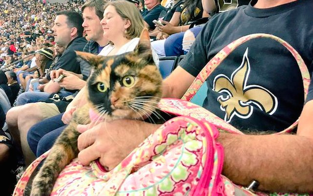 Saints-cat-Falcons-10-15-15.jpg