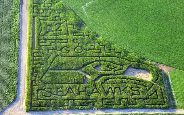 This is what a giant Seahawks corn maze looks like. (Twitter/@Crystallina91011)