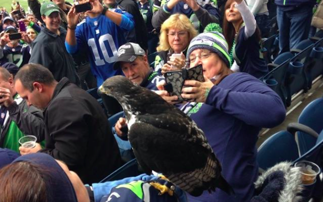 The Seahawks mascot landed on a fans shoulder before the game.