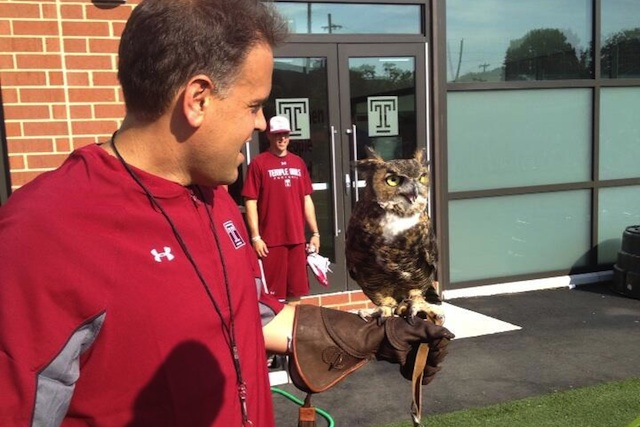 Temple coach Matt Rhule holds Stella, the live owl that will be on the sidelines this fall. (Temple Athletics)