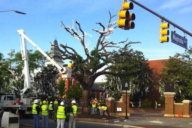 The oak trees at Toomer's Corner were removed on Tuesday. (Tim Brando/Twitter.com). (USATSI)