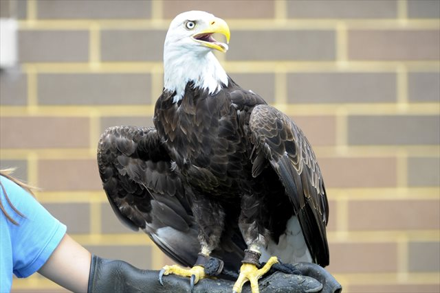 Eagles are awesome, this currently nameless one at B.C.-Villanova included. (USATSI)