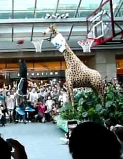 dwight-howard-giraffe