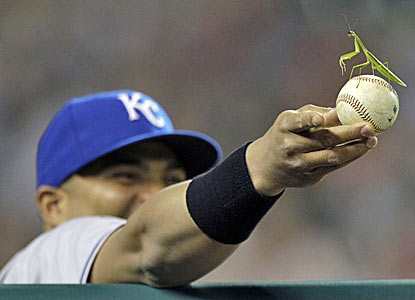 Brayan Pena of the Royals holds a ball with a Mantodea (preying mantis) at arm's length in the eighth inning. (AP)