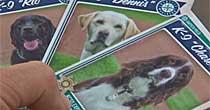 Bomb dogs (CBS)