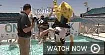 Jacksonville Jaguars (screen grab)
