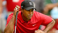 Tiger making strides